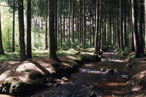 Rando: sur les Plateaux Ardennais