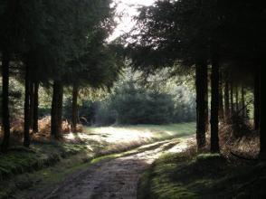 Rando: au Cœur des Forêts Ardennaises