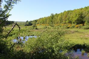 Rando: La Nature hors des sentiers battus